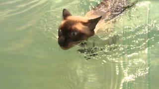 Кот в море плывет