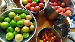 가을끝물 토마토수확부터 가공 그리고 요리까지~ 전부 가…