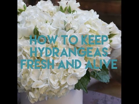 how to keep roses alive longer