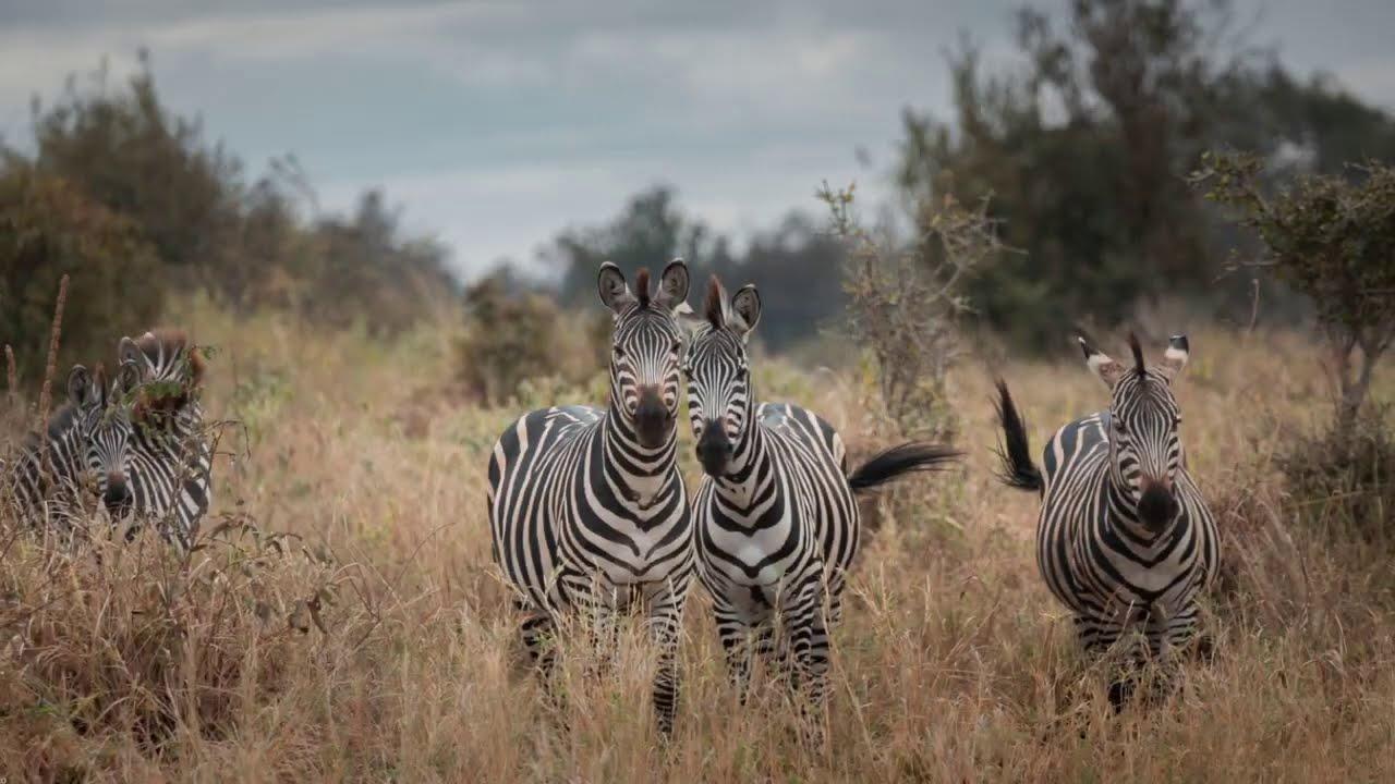 Tanzania 2020: safari in national parks (Ngorongoro, Manyara, Tarangire, Serengeti) and Zanzibar