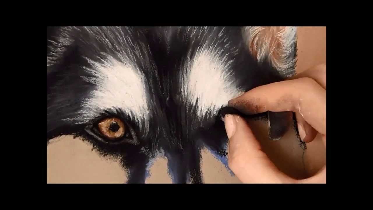 What To Give Dogs To Make Soft Fur