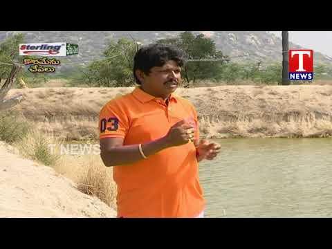 Chenu Chelaka | Farmer Vijay About Korameenu Fish Farming | TNews Telugu