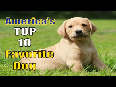 America's 10 Favorite Dog Breeds [ New Edition 2016 ]