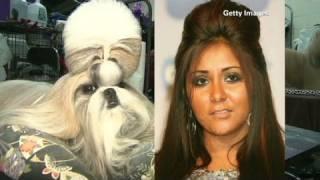 CNN: Snooki hairdo, new breeds at dog show thumbnail