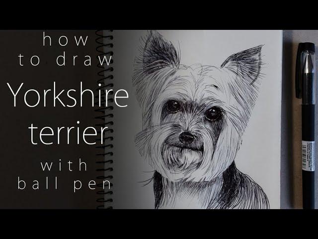Как нарисовать йоркширского терьера How to draw a Yorkshire terrier