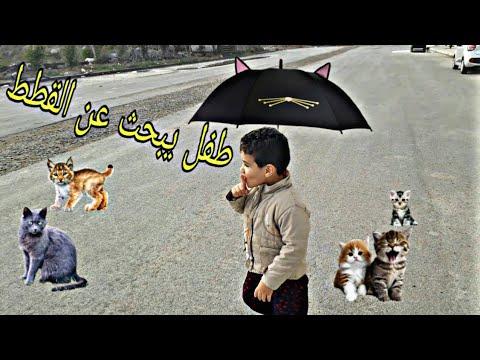 طفل-يبحث-عن-القطط-baby-looking-for-cats
