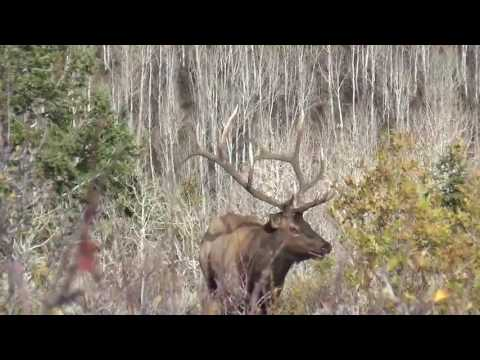2016 Wasatch Big Bulls -- C3 OUTFITTERS