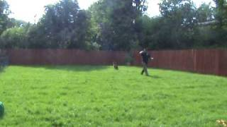 Dan Bucur- Obedience Dog Training -www.facebook.com/canisfidelislondon