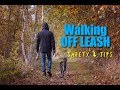 Dog Tips - Walking with Your Dog Off Leash Safely