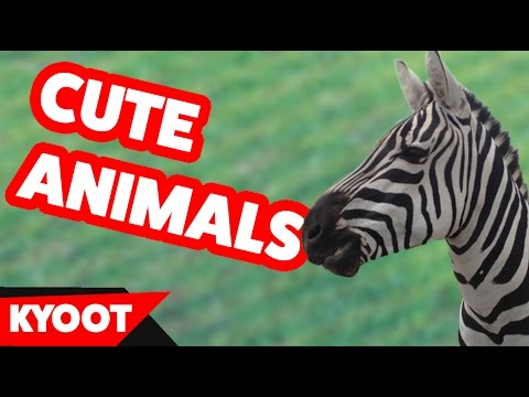 Funniest Cute Pets & Silly Animal Home Videos of 2016 Weekly Compilation | Kyoot Animals