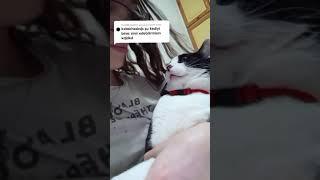 Sinirli Kedi Öpülür Mü? İşte Cevabı 👆