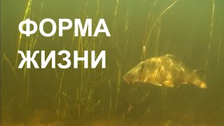 Дельта Волги. River Volga Delta.