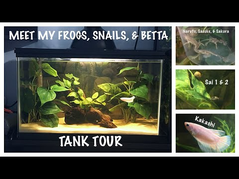 Meet My Betta Fish, Frogs, & Snails + Tank Set Up & Tour