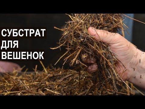 как выращивать гриб вешенка на опилках