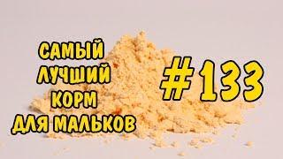 #133 САМЫЙ ЛУЧШИЙ КОРМ ДЛЯ МАЛЬКОВ. THE BEST FOOD FOR FRY