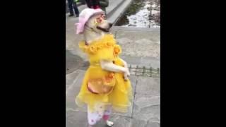 Video Anjing lagi fashion show ha ha download MP3, 3GP, MP4, WEBM, AVI, FLV Agustus 2018