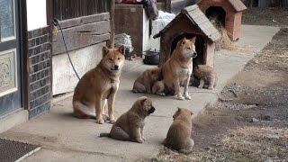 上野村では村民の皆さんが生の声で語り合うことで、上野村の魅力を再発...
