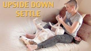 Upside Down Settle - Dog Training