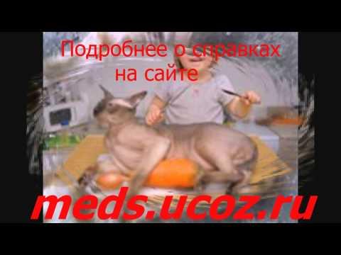 Белгород медицинская справка форма 95 - YouTube