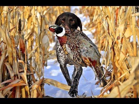 Hunting Gear! Pheasants & Chiefs Fans Now In Season.