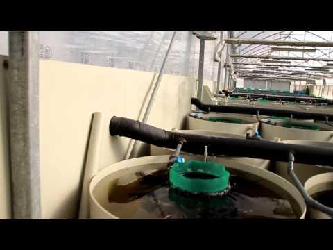 HEJA Visits Phoenix Tropical Fish Farm - Israel