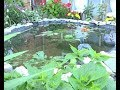 жительница Вятских Полян обустроила у себя на приусадебном участке искусственный водоём с речными ры