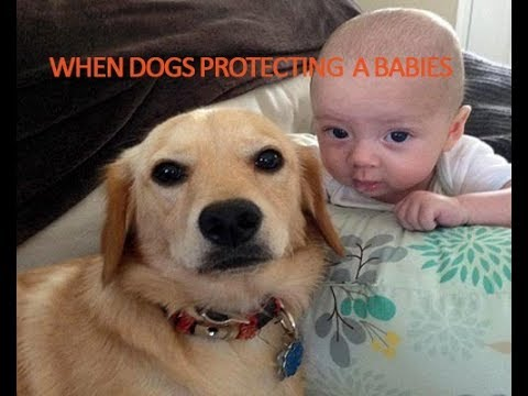 Most Funny and Cute Babies and animals Videos Compilation