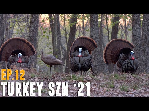 PICTURE PERFECT TURKEY HUNT – Kentucky Opening Day