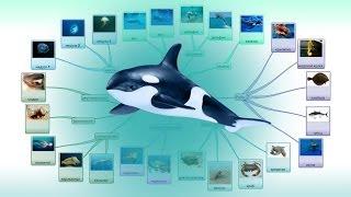 Морские животные - Развивающее видео для детей