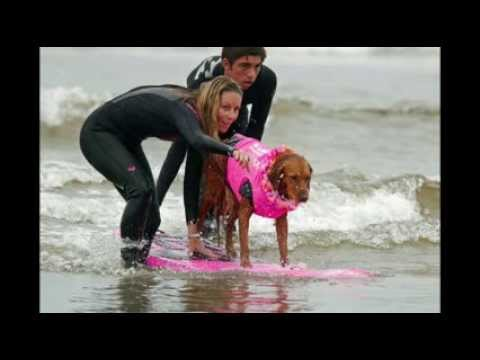 Surf dog Ricochet gets by with a little help from her FURiends!