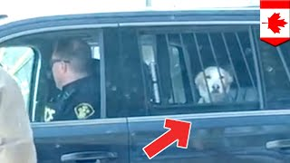 Dog arrested for being a very bad boy after deer attack - TomoNews