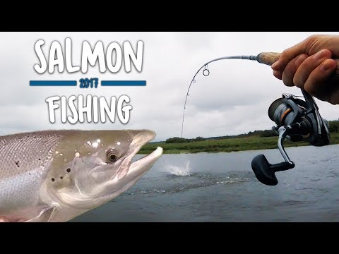 MISTER KÆMPE LAKS UNDER LANDINGEN - Skjern Å | Salmon Fishing