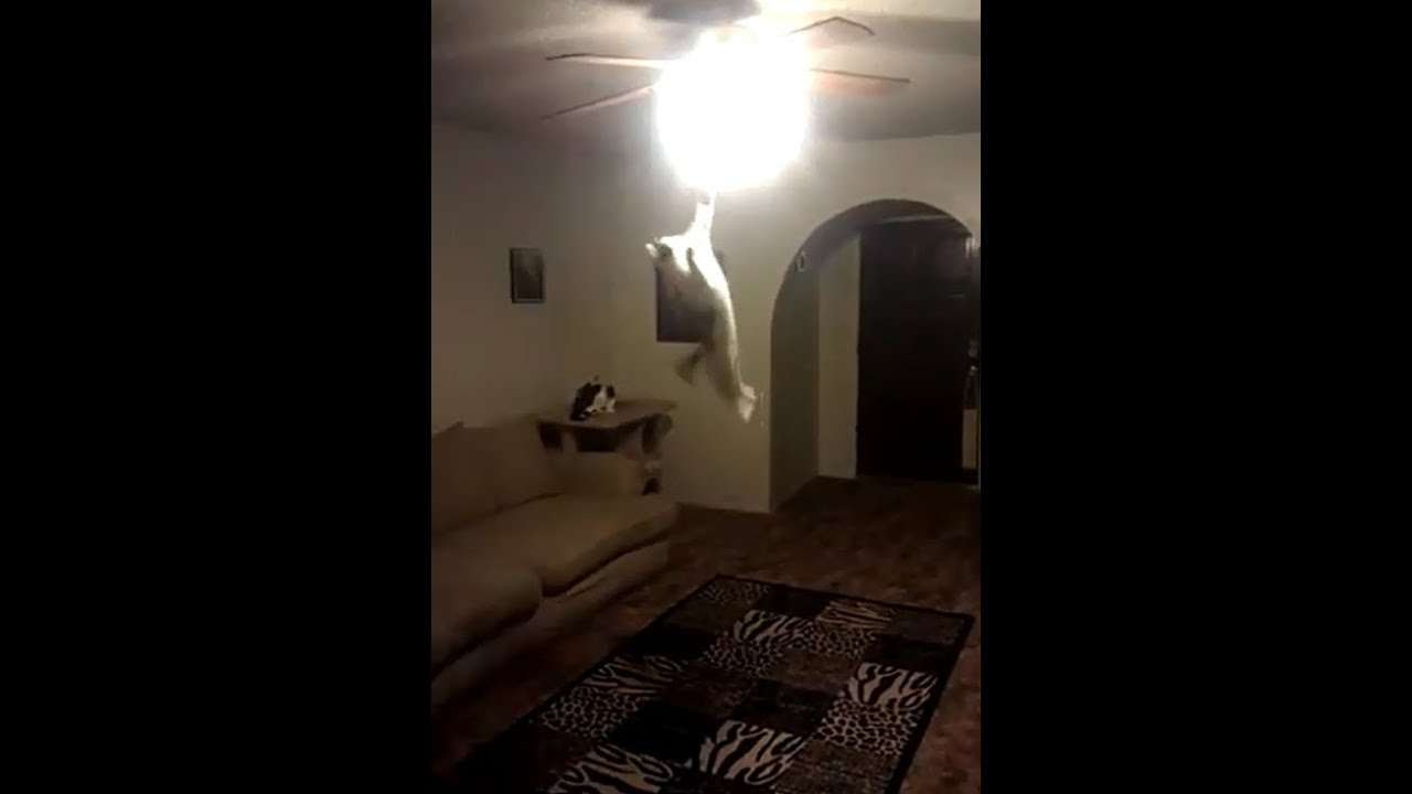 CAT JUMPS 7 + Feet Up Turns out Ceiling Light Amazing ...