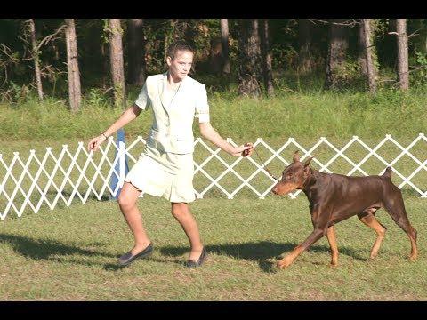 Amazing Dog Show with Super Dog Performance   Best Dog Training