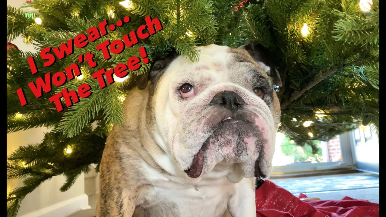 Reuben the Bulldog: 'Tis the Season - скачать с YouTube бесплатно