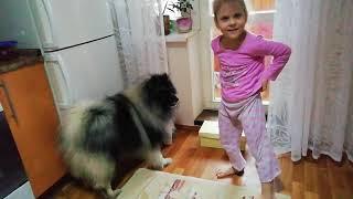 Маргарита укратительница собак (Вольфшпиц Ачи).