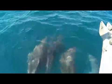 Attalia 32 delfines costa de Huelva.