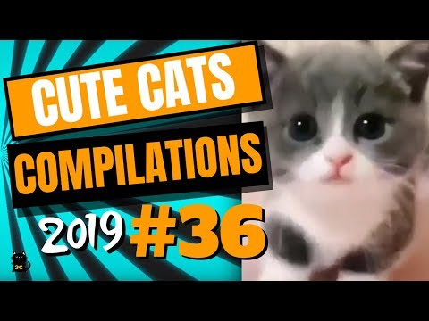 Cute Cats Compilation 2019 - Funny And Cute Cats - Cutest Cats Compilation 2019 #36