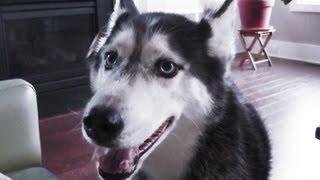 "Mishka says She is ""Really Good"" - Husky Dog Talking"