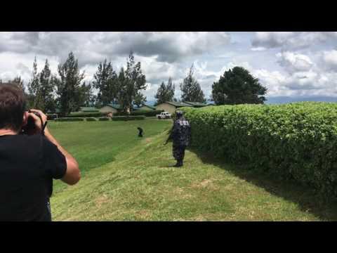 Money falling from the sky on tea estates in Uganda
