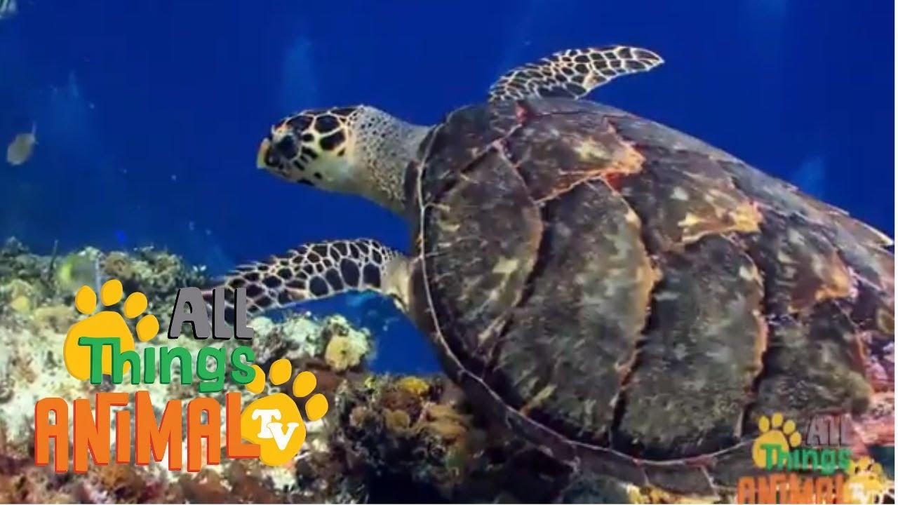 SEA TURTLES. Animals for children. Kids videos. Kindergarten ...