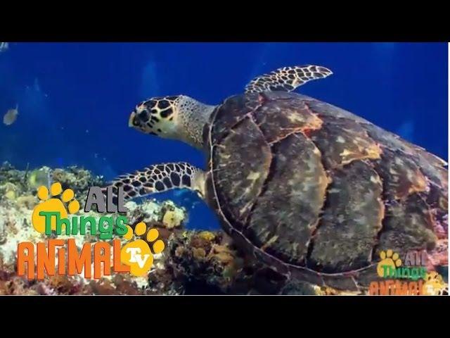 SEA TURTLES. Animals for children. Kids videos. Kindergarten   Preschool learning