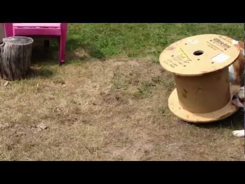 Sausage & G - The Raging Spool