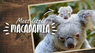 Meet little Macadamia