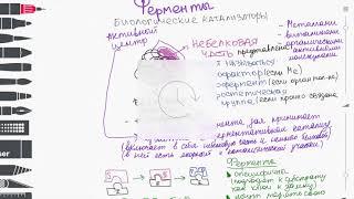 Виды белков. Строение фермента. Скорость ферментативный реакции.