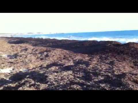 Ocean Reef Beach, Perth. Australia