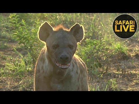 safariLIVE - Sunrise Safari - December 30, 2018