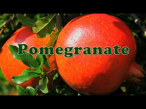 Pomegranate Cultivation