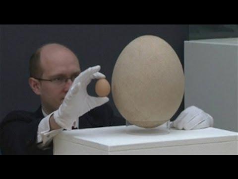 Subastan el huevo m 225 s grande del mundo youtube