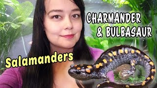 Caring for My Salamanders | Marbled & Spotted